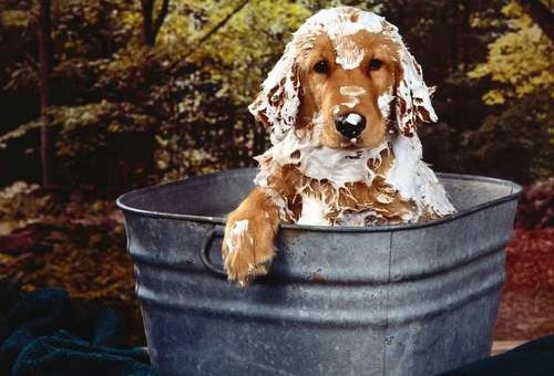 How Often Should You Give Your Dog a Bath?