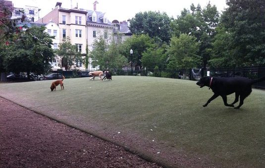 Top 10 Dog Parks in Washington, DC