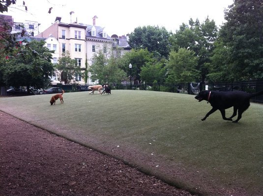 Washington DC dog park