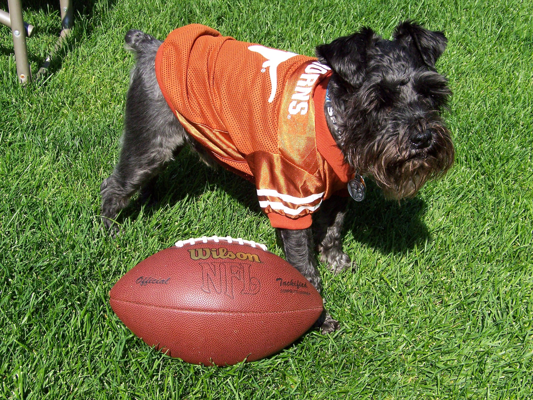 Tucker Texas Football Dog Fan