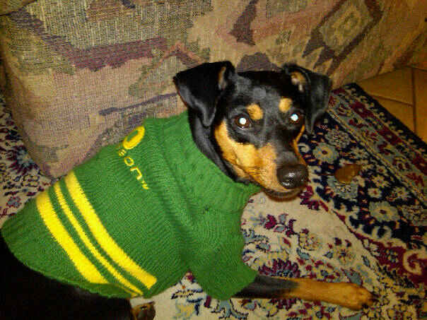 Porter Oregon Ducks Football Fan Dog