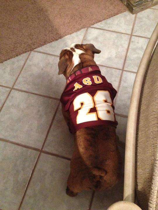Bentley ASU Sun Devils Football Fan Dog