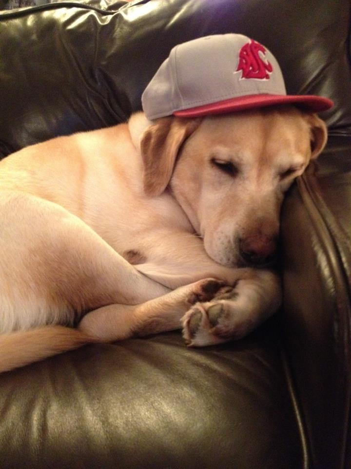 Lois WSU Cougars Football Dog Fan
