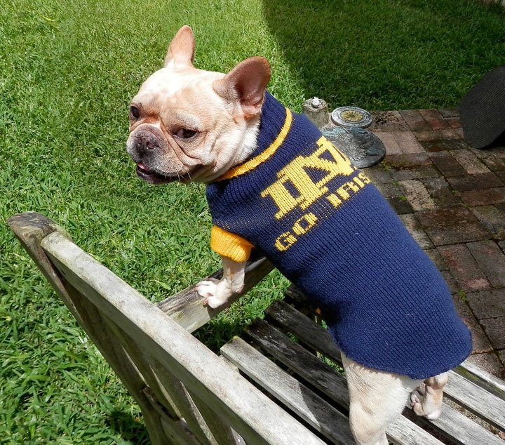 Notre Dame Football Dog Fan