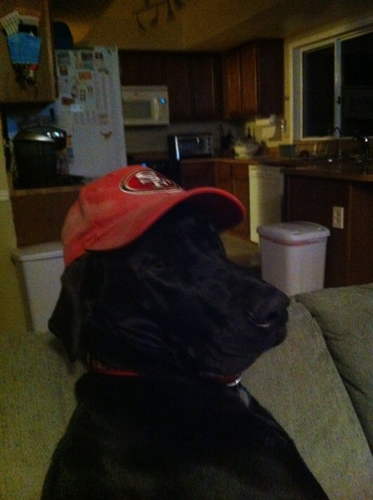 Nogi 49ers Football Fan Dog