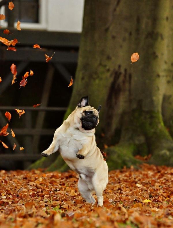Dog Fall Tips