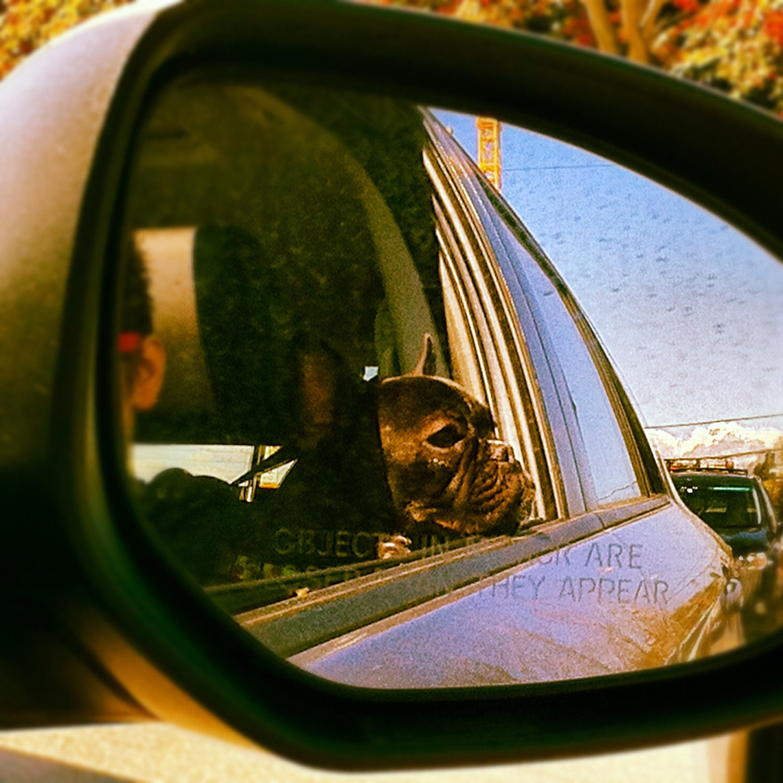 When Dogs Get Car Sick, Here's What To Do