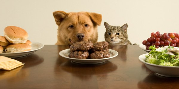 Pet recipes and dangerous foods for dogs