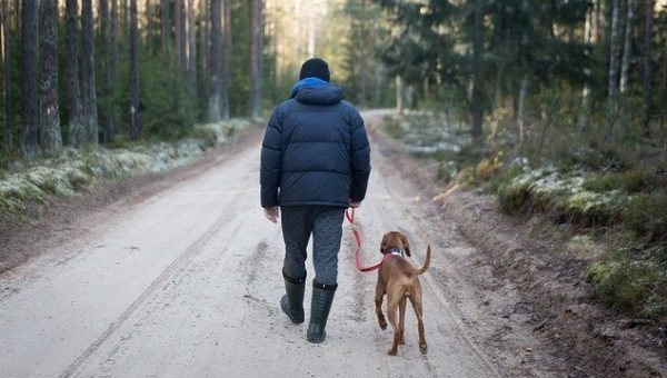 Man Walking Dog - Pixabay