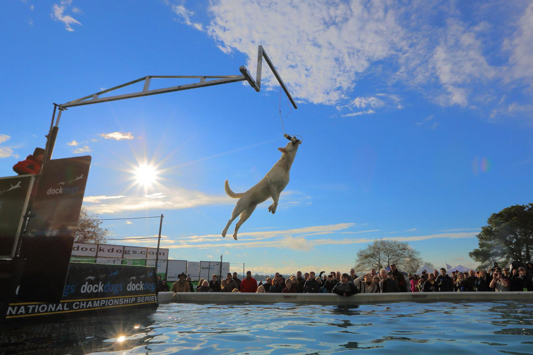 DockDogs Extreme Vertivcal