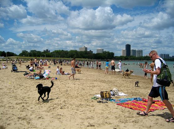 Montrose Dog Beach New