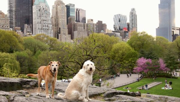 Top 10 New York City Off-Leash Dog Parks