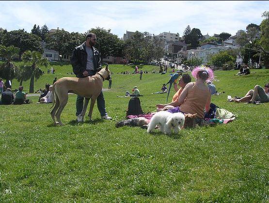 San Francisco Dog Parks Off Leash
