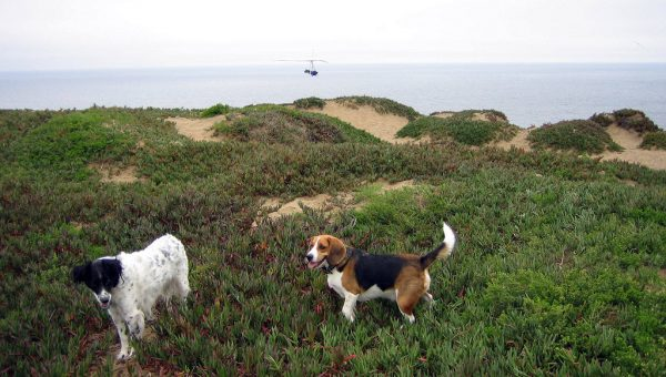 Top 10 Dog Parks in San Francisco