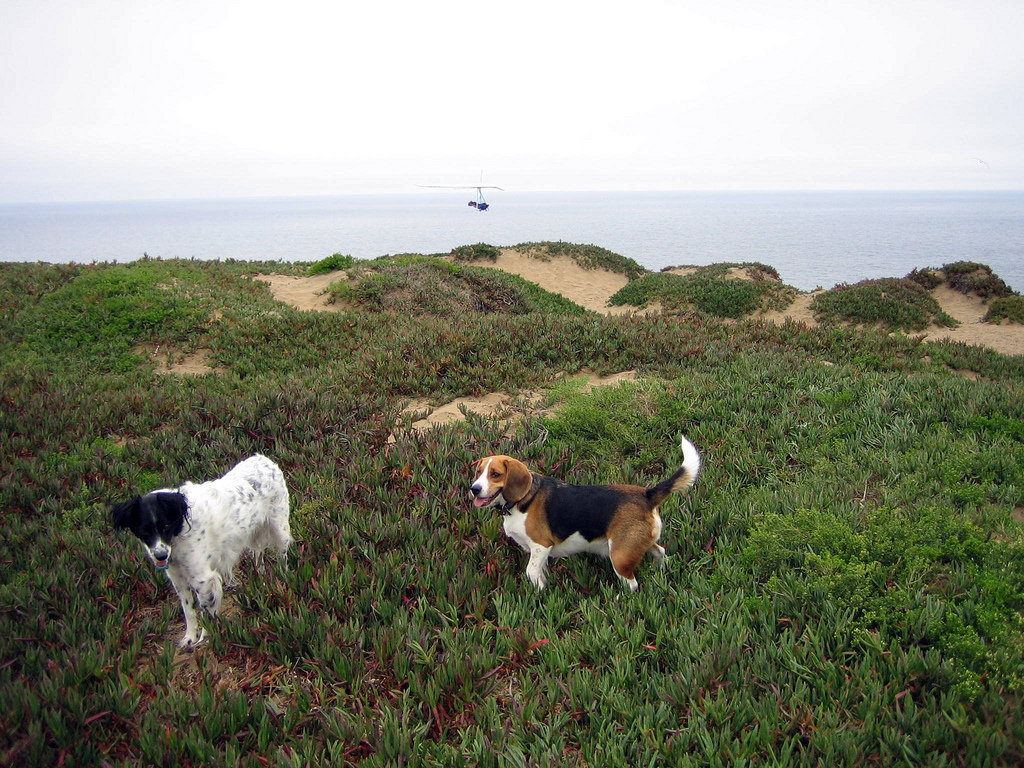 Fort Funston dog hike in san francisco