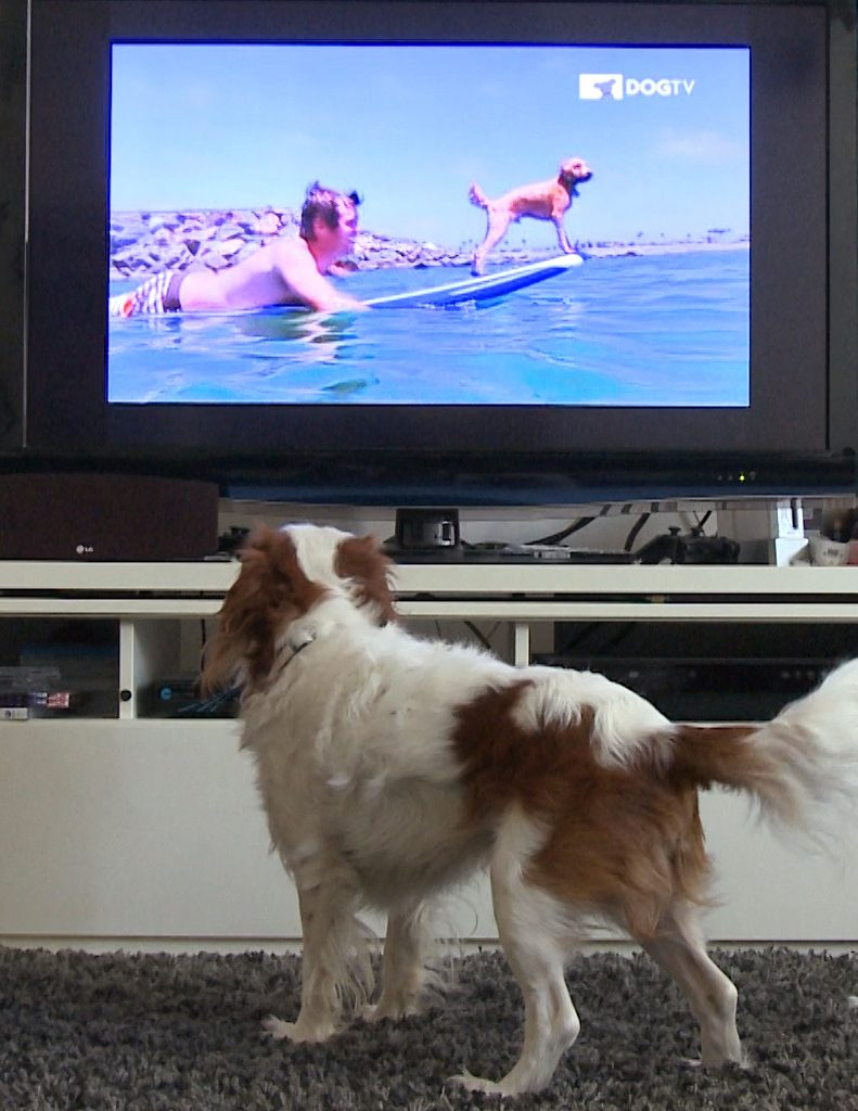 DogTV Photo