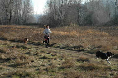 sandy river delta dog park portland