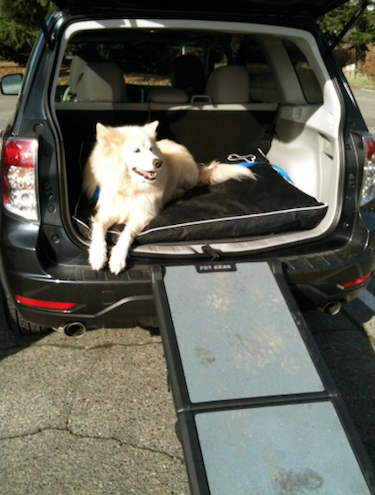 Blizzard about to use the tri-fold ramp that helps him in and out of the car. // Photo credit: Olivia Zinn