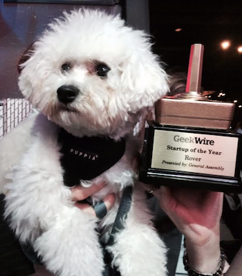Laika, a Rover.com dog, at the GeekWire Startup of the Year gala in Seattle, Wash., May 8, 2014