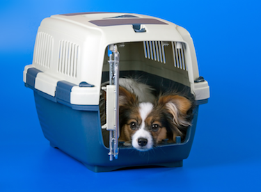 How to crate train your puppy: Rover.com blog // Photo credit: iStock