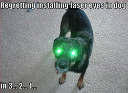 Dogs with frickin laser beams coming out of their heads
