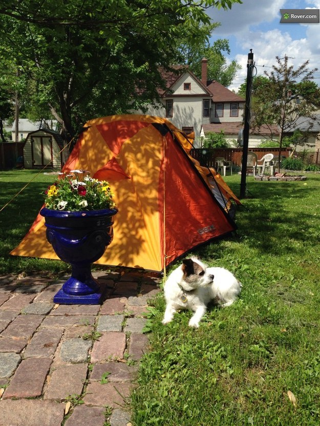 Backyard camping staycation dog boarding