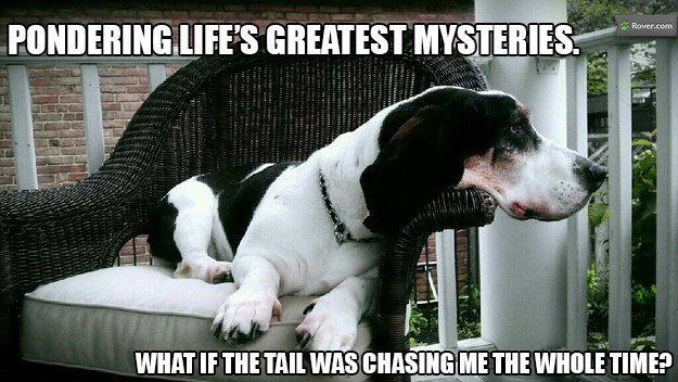 Dog Philosopher