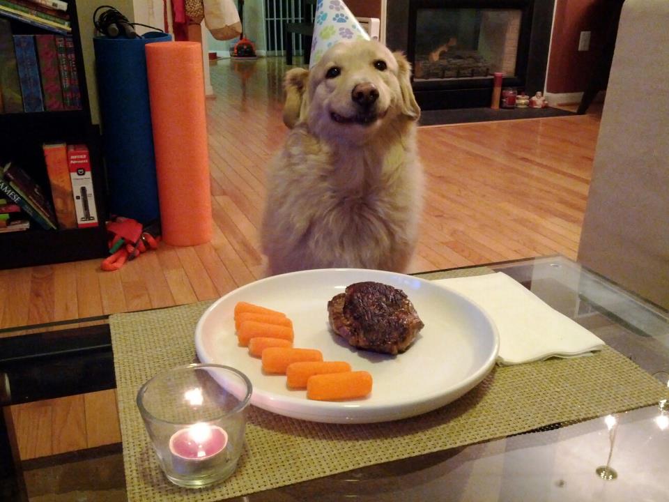 dog eating a gourmet dinner