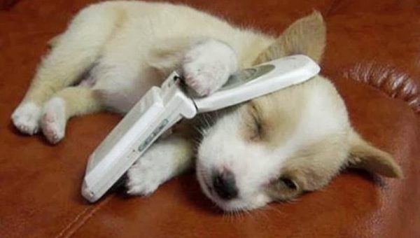 We're Calling in the Puppy Troops for the Cuteness You Need