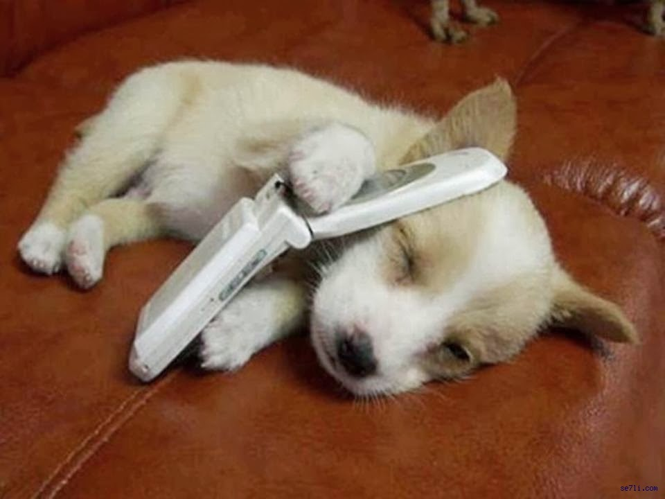 Puppy on a cell phone