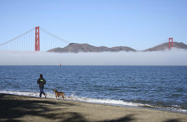 San Francisco dog lovers