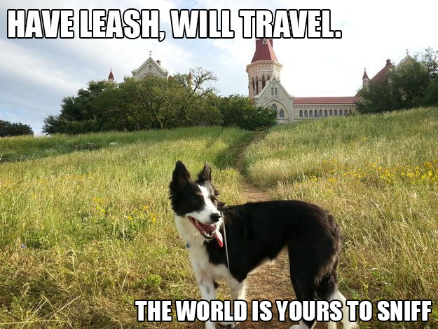 Summer Travel Dog