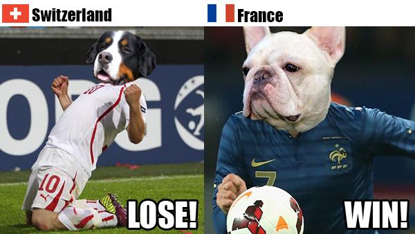 Rover.com's World Cup Predictions: Switzerland vs. France // Rover.com Blog