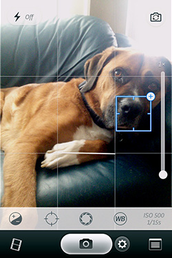 Taking Great Dog Photos With A Cell Phone