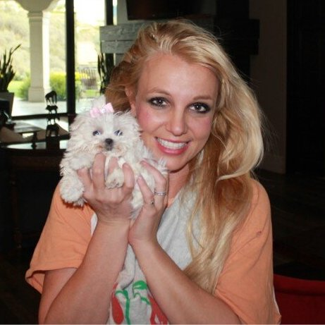 Britney Spears and her maltese