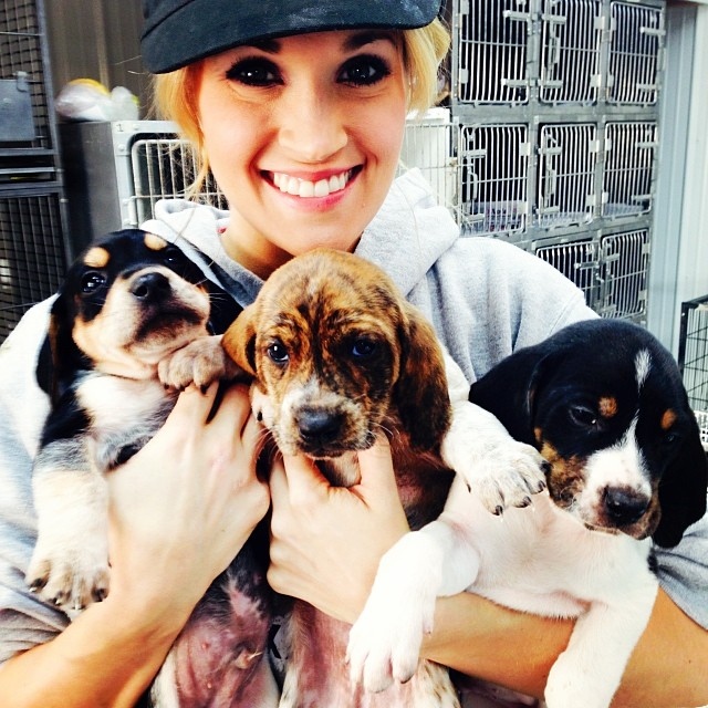 Carrie underwood and puppies