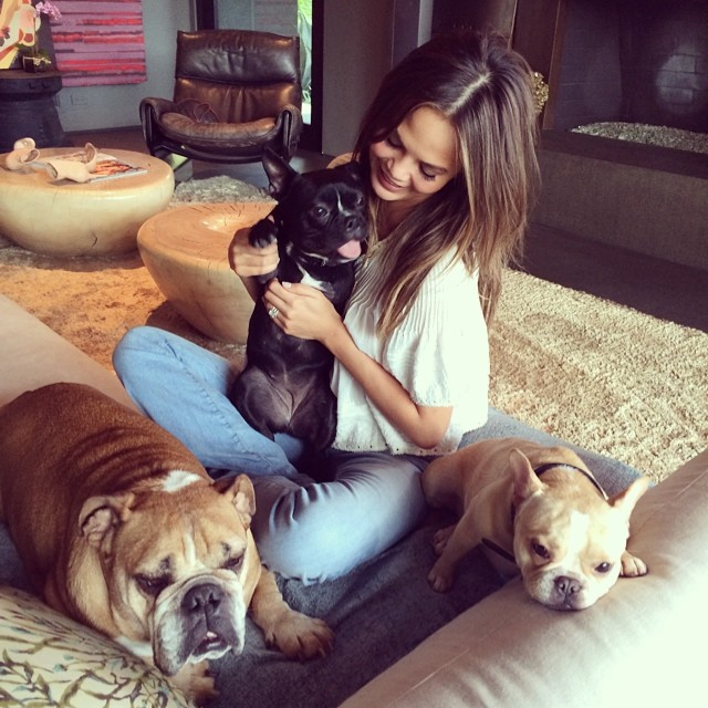 Chrissy Teigen and her dogs, bulldogs