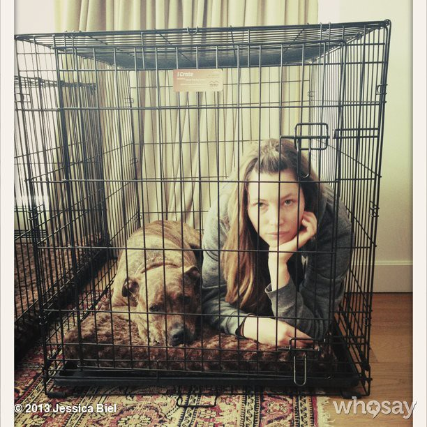Jessica Biel and her dog, Tina the pit bull