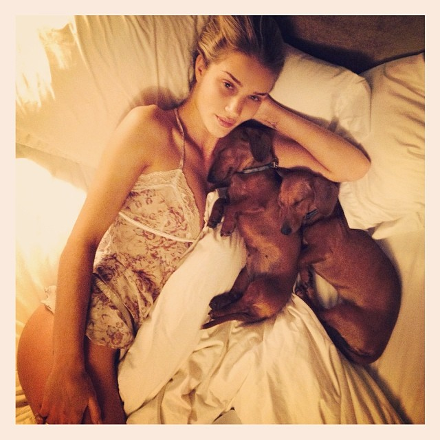 Rosie Huntington-Whiteley dachshunds