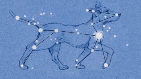 Canis Major illustration, dog astrology