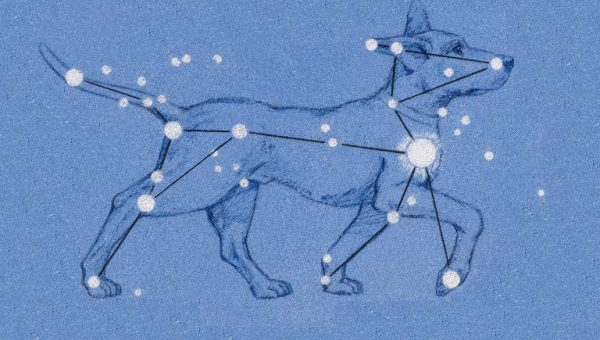 Canis Major illustration, dog astrology