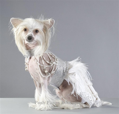 Futuristic dog dress, star wars dog wedding