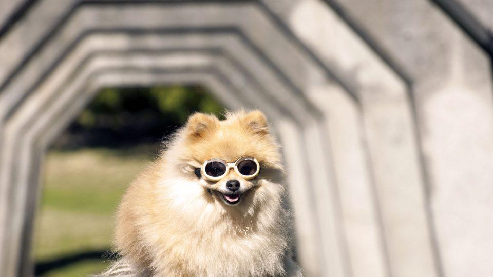 Gasworks dog - best Seattle dog parks