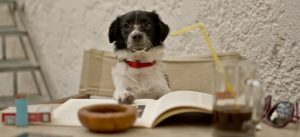 Kitchen dog reads book - dog books