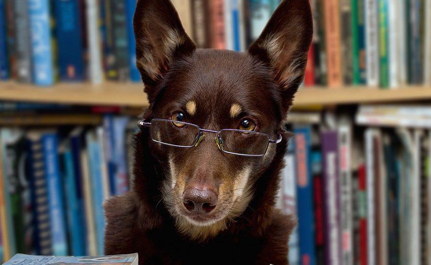 Dog librarian - summer dog books