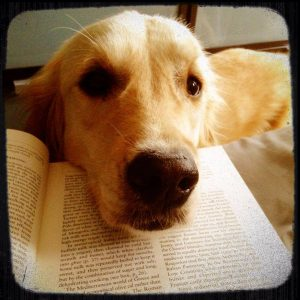 Dog nuzzles book - dog books