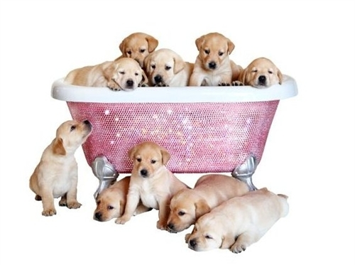 dog bathtub, doggie bathtub, dog bath