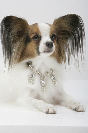 Dog diamond necklace