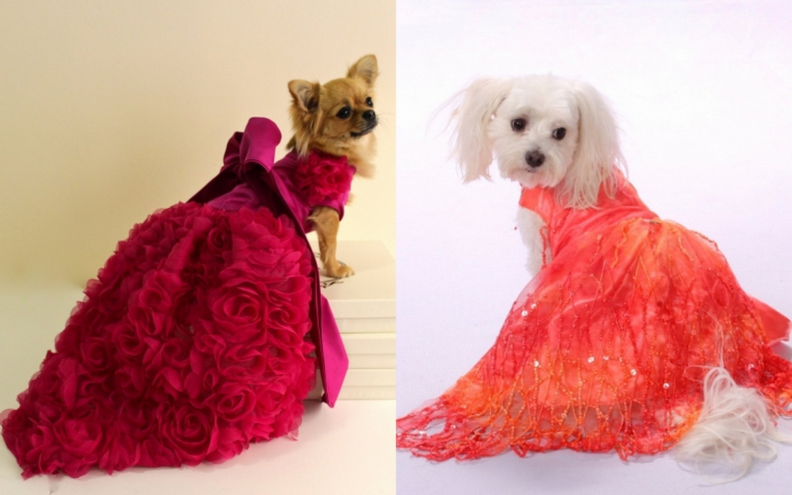 dog dresses, canine couture