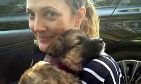 Drew Barrymore, Celebrity Dog Lover